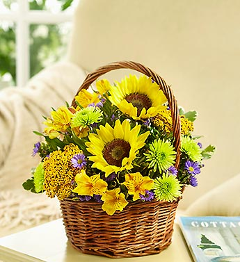 Fields of Europe for Summer Basket